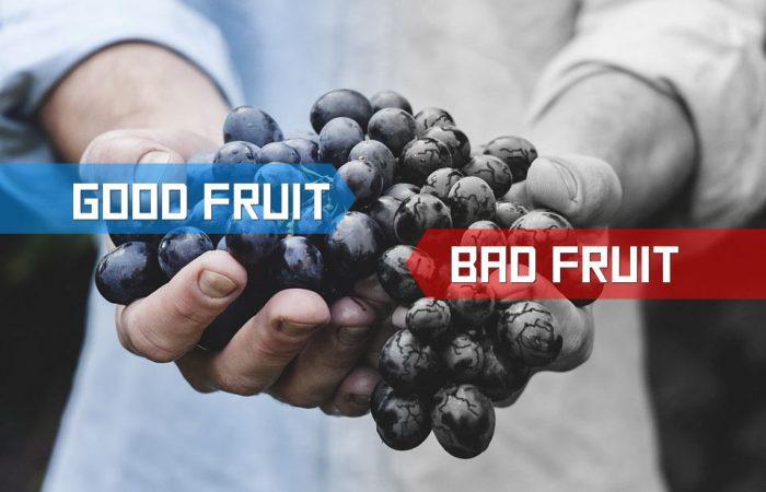 Fruit-inspector